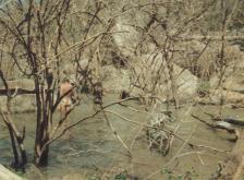 canoes 3