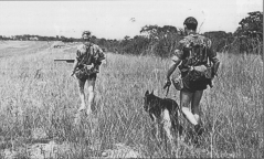 DOG SQUAD FOLLOW UP 1978